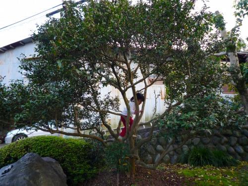 しばきり園03
